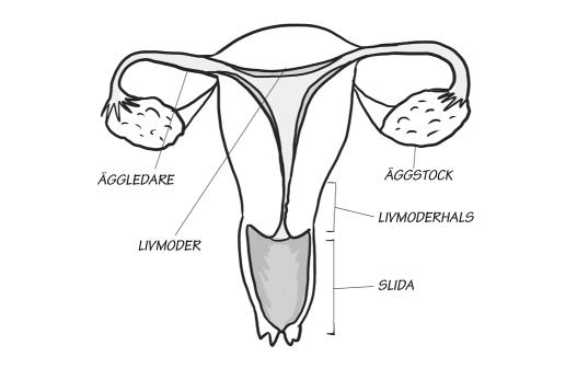 Det är inte livmodern man har sex med